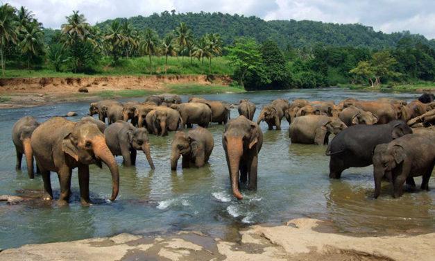 Top 6 Sri Lanka
