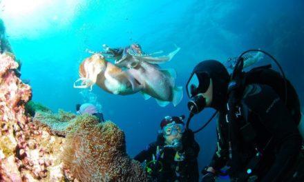 De 7 gaafste snorkellocaties ter wereld