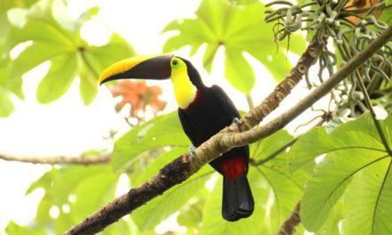 7 tips voor Costa Rica