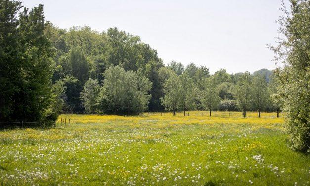 Wandelen in en proeven van de Vlaamse Ardennen